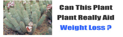 Weight Loss Hoodia